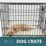 Best Dog Crates and Cages UK – Small, Medium and Large