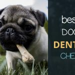 Best Dog Dental Chews 2018