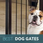 Best Dog Gates 2021 for Indoor Use and Staircases