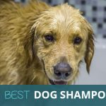 Best Dog Shampoo 2018: Leave Your Dog Smelling Amazing