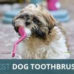 What's the Best Dog Toothbrush? Our Picks for 2021