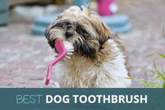 Best Dog Toothbrush: Dental Care Kit: Buy Online in UK