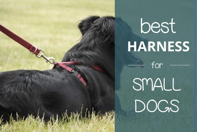 best small dog harness