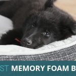 The Best Memory Foam Dog Beds in 2018