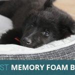 The Best Memory Foam Dog Beds in 2020