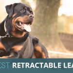 Best Retractable Lead and Adjustable Dog Leads 2018 – Our Favourite Picks