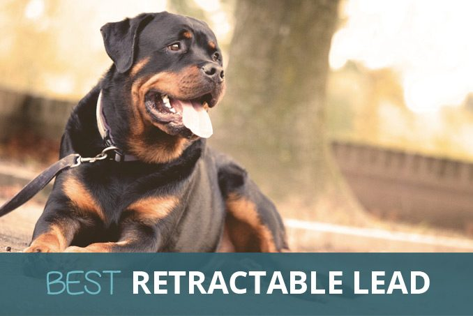 The Best Retractable Dog Lead in UK: Buy on Amazon