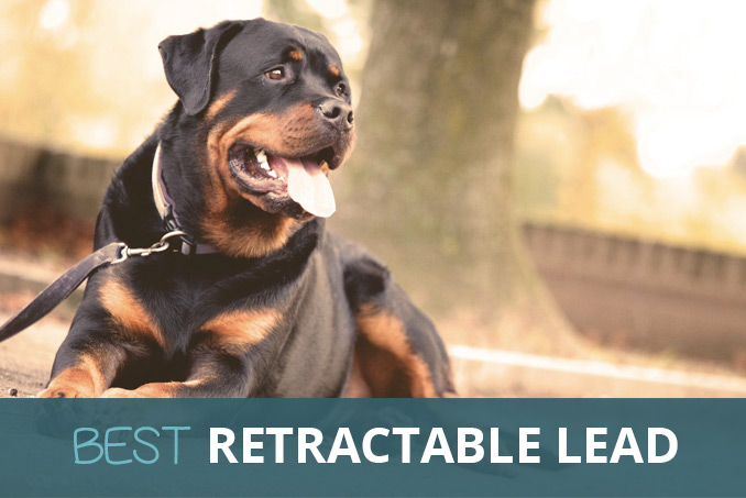 Best Retractable Lead And Adjustable Dog Leads Pooching