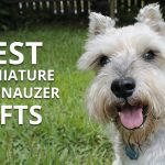 Best Gifts for a Miniature Schnauzer Owner.