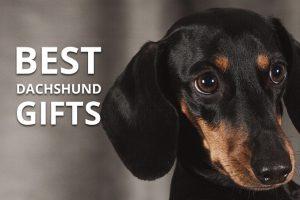 best dachshund gifts