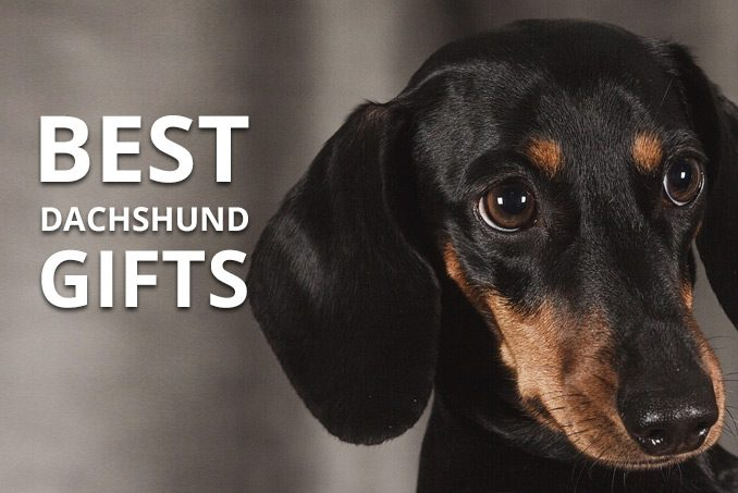 best dachshund gifts