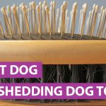 Best Deshedding Dog Tool: Which Is The Best Buy and Tips