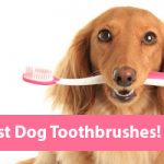 The Best Dog Toothbrush Picks for 2018