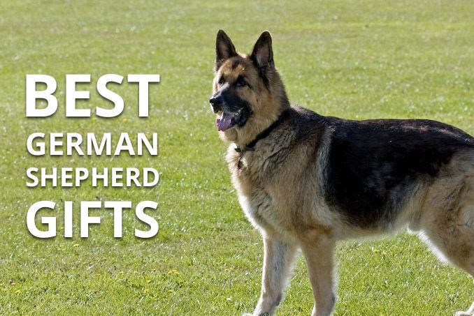 Best Gifts For A German Shepherd Alsation Owner Pooching Around