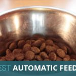 Best Automatic Dog Feeder: Feed Your Pooch While You Are Out