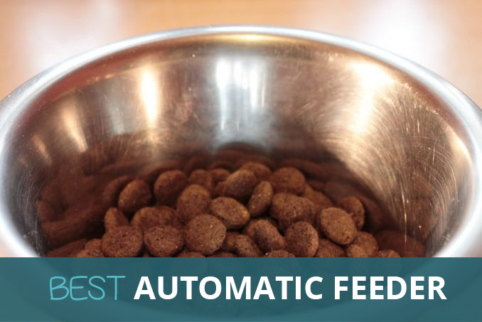 Best Automatic Dog Feeder Buyers Guide Pooching Around