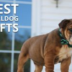 Best Gifts for a Bulldog Owner