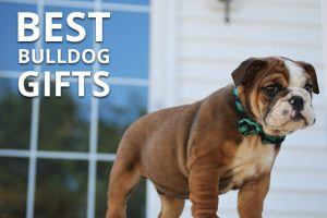 best bulldog gifts