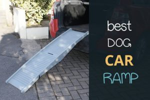best dog car ramp