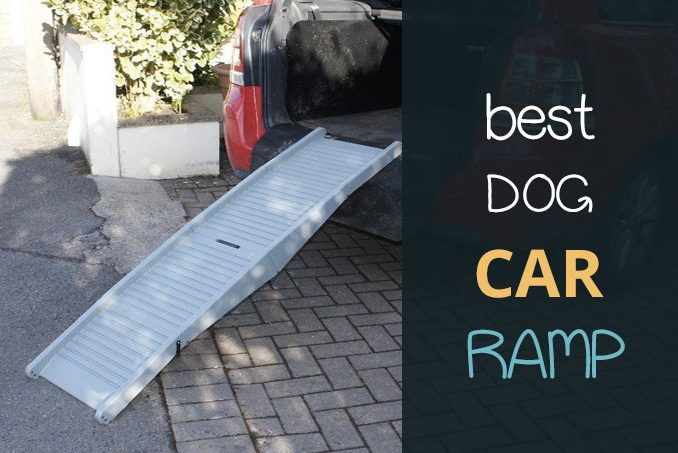 best dog car ramp