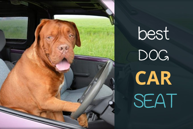 best dog car seat 8 seats to keep your pet safe while driving