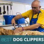 Best Dog Clippers for Grooming ​2018