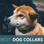 Are These The Best Dog Collars? We Like To Think So.