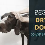 Best Dog Dry Shampoos: Water Free Washing