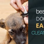 Best Dog Ear Cleaner. Most effective dog ear care treatment options