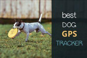 best dog gps tracker