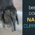 Best Dog Nail Clippers for Grooming Dogs At Home