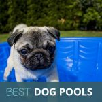 Best Dog Paddling Pools 2018: Fun and Cooling for your Dog