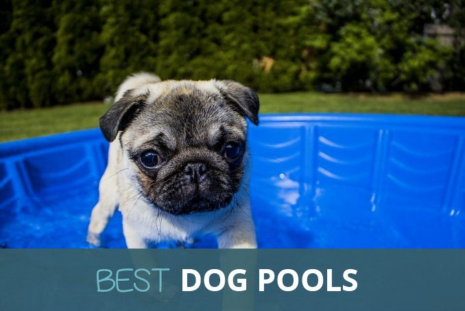 best dog pools