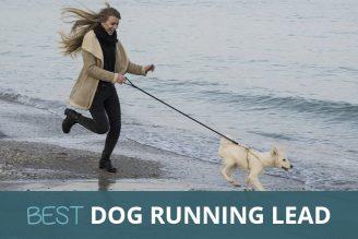 best dog running lead