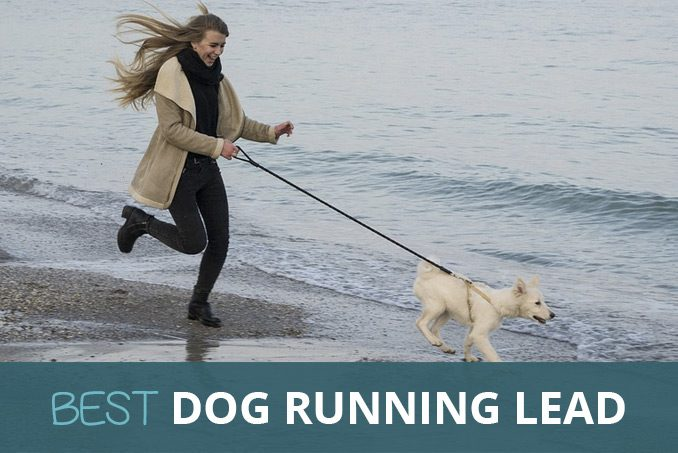 best dog running lead