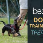 Best Dog Training Treats: Which Ones Should You Use?