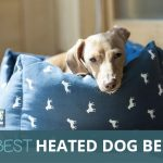 Best Heated Dog Beds 2018: Keep Your Dog Warm
