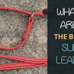Best Slip Leads for Dogs: Top Picks Reviewed