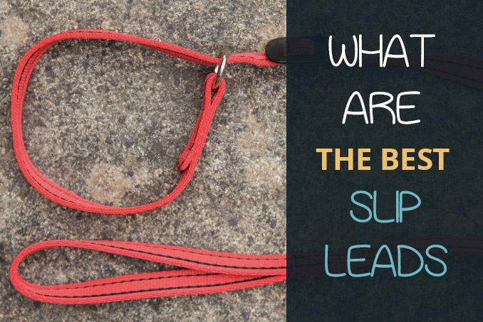 best slip leads