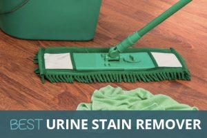 best dog stain urine remover