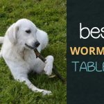 Best Dog Worming Tablets and Wormers: 5 Options To Consider