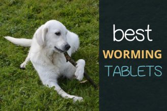 Buy Dogs Puppies Worming Tablets for Tapeworms on Amazon UK