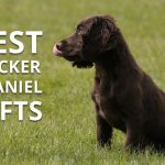 Best Gifts for a Cocker Spaniel Lover