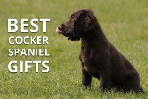 best cocker spaniel gifts