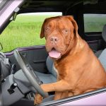 Best Dog Car Seat: 8 Seats To Keep Your Pet Safe While Driving