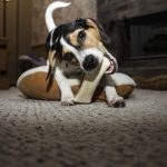 Best Natural Dog Chew: Our Top Natural Picks