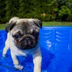 Best Dog Paddling Pools