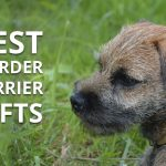 Best Gifts for a Border Terrier Owner