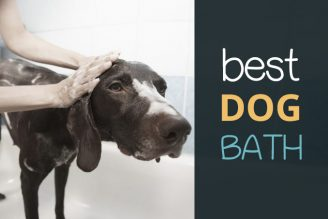 best dog bath