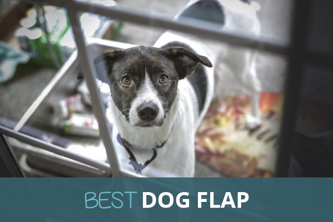 Best Dog Flap Automatic And Manual Pooching Around